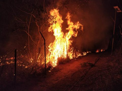 Assam Rifles Prompt Action Saves Village from Wild Fire