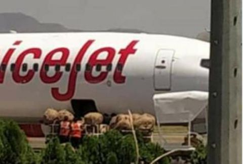 At time of crisis, Cargo flight that is supposed to airlift essential commodities landed with bundles of betel leaves