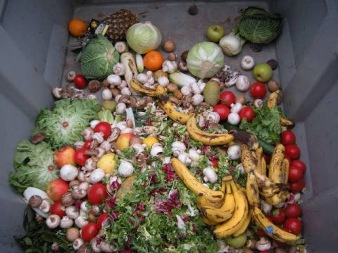 Food Wastage & its Impacts