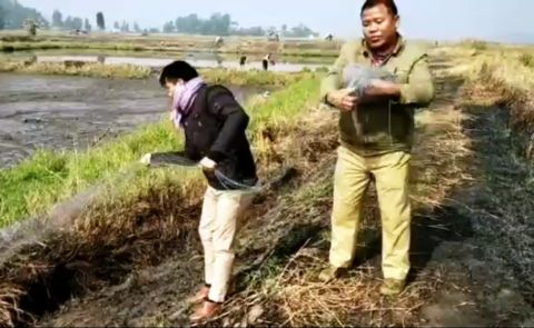Drive against trapping of migratory birds conducted